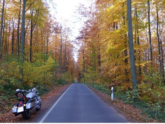 Herbst in DD